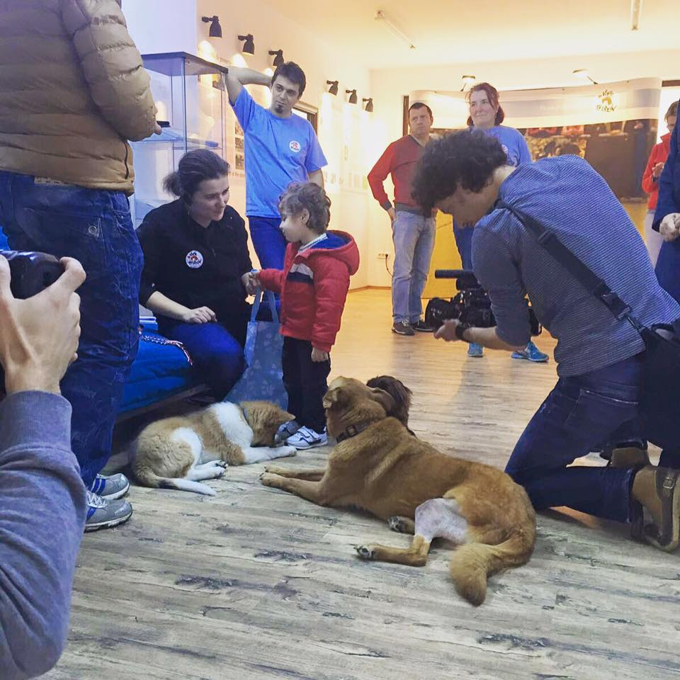 On set: ex-stray dogs for dog assisted therapy to help disabled children in Romania