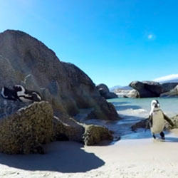 360° penguin video for FOX